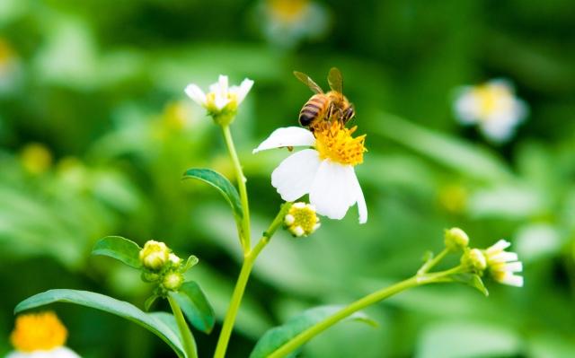 ビーポーレン 花粉 蜂